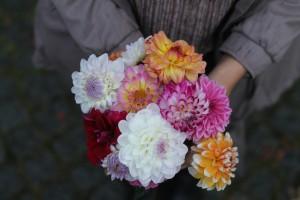 Blumenstrauss Blumenstrauß flowers